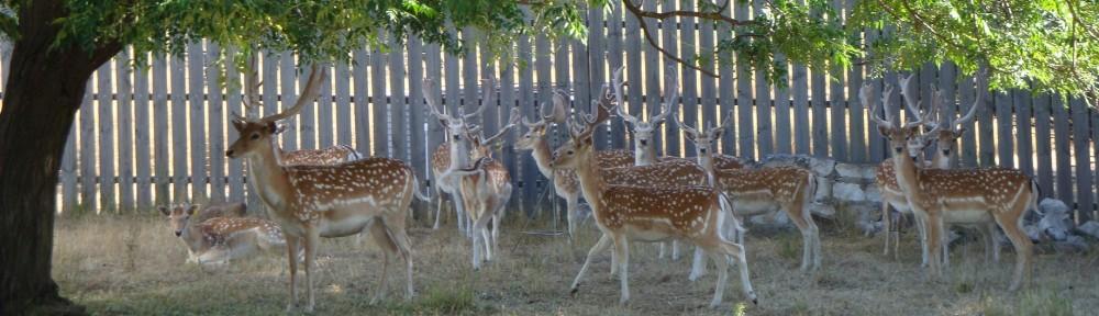 The Deer Farm